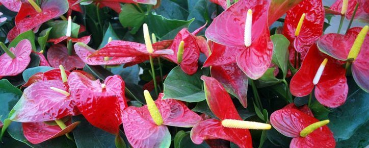 Anthurium artificial,  Flor Falsa Artificial de Anthurium, Flores del Lirio del Anthurium Artificial, mejores Flores de Anthurium Artificial, lirio de agua